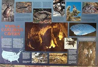 Wildlife of Carlsbad Cavern - Product Image