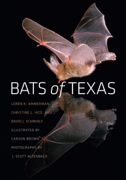 Bats of Texas - Product Image
