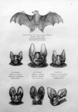 Carl Brodtman Bats - Product Image