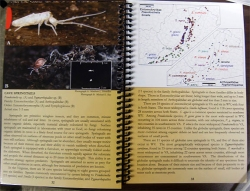 Cave Life Of The Virginias: A field guide to commonly encountered species - Product Image