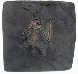 Fossil Bat Skeleton Casting - Paleochiropteryx spiegeli, Messel bat, large - Product Image