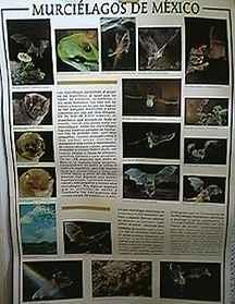 Murcielagos De Mexico - Product Image