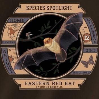 Species Spotlight Tee Shirt - Eastern Red Bat - Product Image