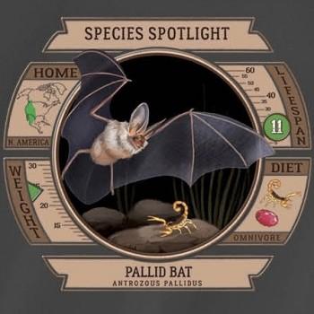 Species Spotlight Tee Shirt - Pallid Bat - Product Image