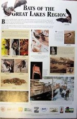 Bats Of The Great Lakes Region - Product Image
