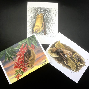Fiona Reid Bat Art Note Cards New Releases - Product Image