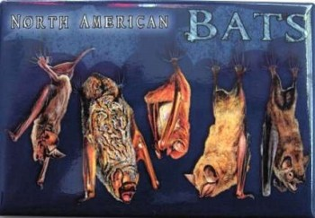 North American Bats Magnet - Product Image