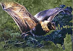 Premium Rain Forest Fruit Bat Card - Product Image