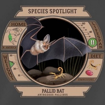 Species Spotlight Tee Shirt - Pallid Bat - Product Image